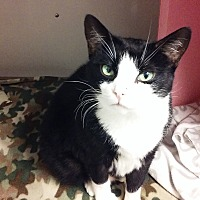 Adopt A Pet :: Bobbie Ann - Diamond Springs, CA