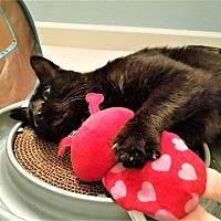 Adopt A Pet :: Lover Boy - Atlanta, GA