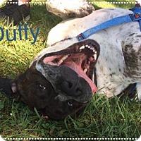 Adopt A Pet :: Duffy - Jasper, IN