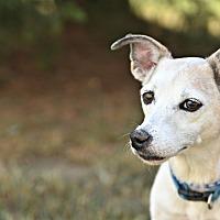 Adopt A Pet :: Lila - Siler City, NC