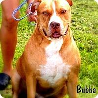 Adopt A Pet :: Bubba - Orlando, FL