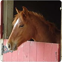 Adopt A Pet :: Stanley - Marengo, OH