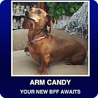 Adopt A Pet :: Sophia - Morrisville, PA