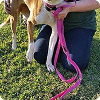 Adopt A Pet :: RICKY - Beaumont, TX