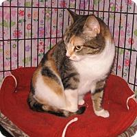 Adopt A Pet :: Sally - Colmar, PA