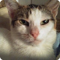 Adopt A Pet :: Destiny - Los Angeles, CA