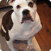 Adopt A Pet :: Ellie - Warsaw, IN