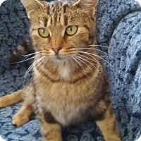 Adopt A Pet :: Esmerelda (6-month girl) - Witter, AR