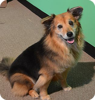 Collie Mix Dog for adoption in LaGrange, Kentucky - Revan