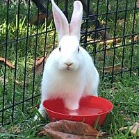 Adopt A Pet :: Moonpie - CC's baby - Baton Rouge, LA