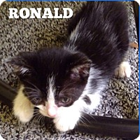Adopt A Pet :: Ronald - Marianna, FL