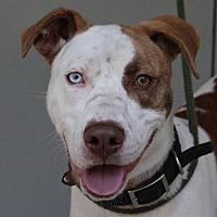 Adopt A Pet :: Rosco (TIA) - Washington, DC