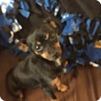 Adopt A Pet :: Clover - Rexford, NY