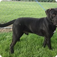 Adopt A Pet :: Romeo - Olive Branch, MS