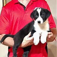 Adopt A Pet :: Bo - South Euclid, OH