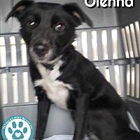 Adopt A Pet :: Olenna - Kimberton, PA
