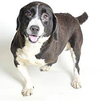 Adopt A Pet :: LESPAUL - Pennsville, NJ