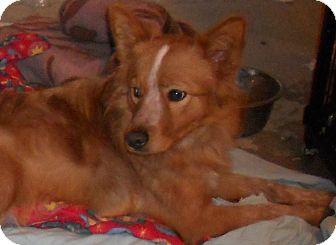 Border Collie Mix Dog for adoption in Aloha, Oregon - Border Collie Mix
