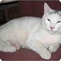 Adopt A Pet :: Sooty - Cincinnati, OH