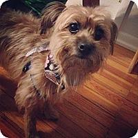 Adopt A Pet :: Nori - Chicago, IL