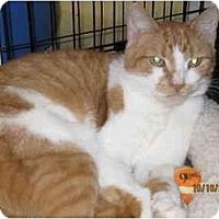 Adopt A Pet :: Lucy - Catasauqua, PA