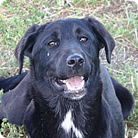 Adopt A Pet :: Sampson - PENDING, in Maine - kennebunkport, ME