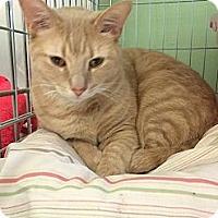 Adopt A Pet :: Arizona - New York, NY