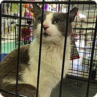 Adopt A Pet :: Bobbie McGee - Chicago, IL
