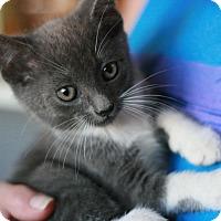 Adopt A Pet :: Moose - Canoga Park, CA