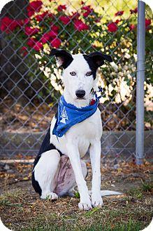 Border Collie Mix Dog for adoption in Corning, California - CHLOE