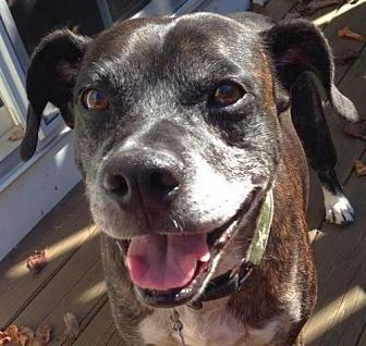 Boxer/Terrier (Unknown Type, Medium) Mix Dog for adoption in Rockaway, New Jersey - Two Socks