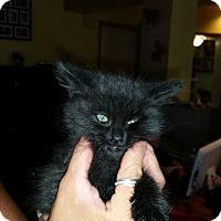 Adopt A Pet :: STORM - temecula, CA
