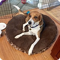 Adopt A Pet :: Onnie - Rexford, NY