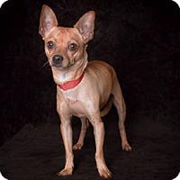 Adopt A Pet :: Ritz - Van Nuys, CA