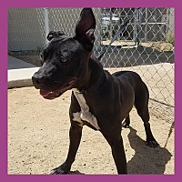 Adopt A Pet :: Mia - California City, CA