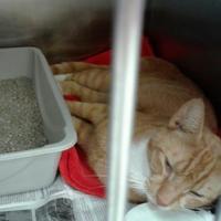 Adopt A Pet :: Lennon - Myrtle Beach, SC