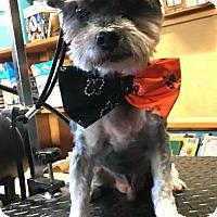 Adopt A Pet :: Lennon - Freeport, NY