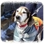 Photo 3 - Beagle/Hound (Unknown Type) Mix Dog for adoption in Peconic, New York - Lilly