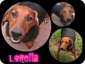 Doberman Pinscher/Beagle Mix Puppy for adoption in Alamosa, Colorado - Loretta