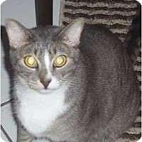 Adopt A Pet :: Whisper - Fort Lauderdale, FL