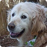 Adopt A Pet :: Flo - Denver, CO