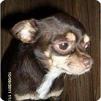 Adopt A Pet :: Hampton - Chandlersville, OH