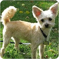 Adopt A Pet :: Oliver - Austin, TX