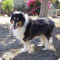 Adopt A Pet :: Buttons - Riverside, CA