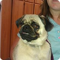 Adopt A Pet :: Macy Jane - Eagle, ID
