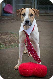 Hound (Unknown Type)/Boxer Mix Dog for adoption in Hagerstown, Maryland - Highway
