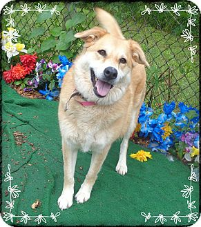 Collie/Retriever (Unknown Type) Mix Dog for adoption in Marietta, Georgia - ROSIE