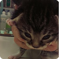 Adopt A Pet :: Carly - Edmonton, AB