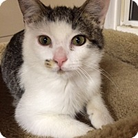 Adopt A Pet :: Speckles - Monroe, GA