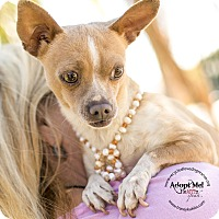 Adopt A Pet :: CHIQUILIN - Inland Empire, CA